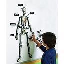 Educational Insights Hands-On 3-D Demonstration Magnets Skele (1760)
