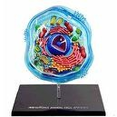 Famemaster 4D-Science Animal Cell Anatomy Model