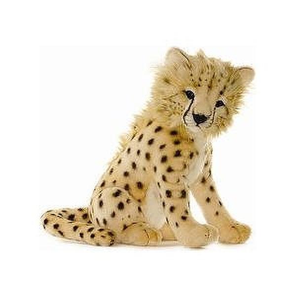 albino cheetah